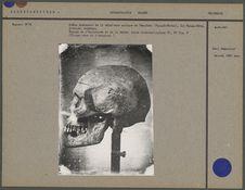Crâne provenant de la sépulture antique de Téa-Kaou