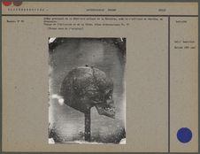 Crâne provenant de la Sépulture antique de la Motchita