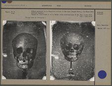 Crânes provenant de la Sépulture antique de Téa Kaou