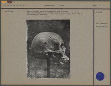 Crâne de Chinois