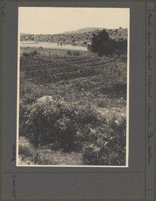 Jardin: planches d'oignons