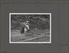Epandage de fumier de chèvre suivi d'une irrigation sur des planches d'oignons