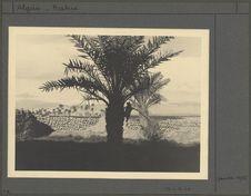 Crâne de mulet accroché dans un palmier