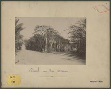 Bourail : une avenue