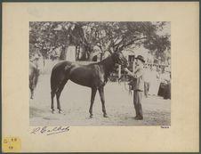 Sans titre [un homme tenant un cheval]