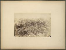 La forêt à Comalcalco, Tabasco
