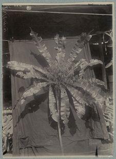 Ein bloem mit Noord Nieuw Guinea