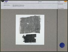 Deux fragments de toile de laine
