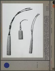 Etuis péniens en feuille de ronier