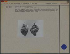 Spécimens de coquillages
