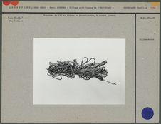 Echeveau de fil en fibres de Broméliacées