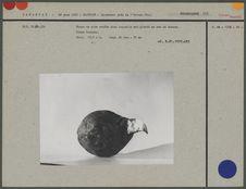 Bec de toucan fiché dans une boule de cire