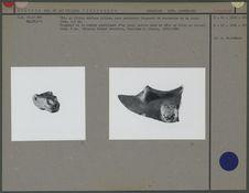 Tête de félin et fragment de la partie supérieure d'un vase