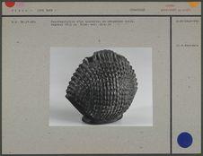 Représentation d'un spondyle, en céramique