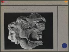 Glyphe en stuc représentant la tête de Kin