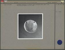 Pendentif circulaire
