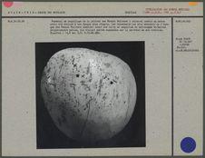 Pectoral en coquillage de la période des Mounds Builders