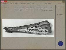Mémorial de chasse, mâchoire de bélouga