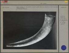 Corne à poudre en corne décorée de motifs gravés