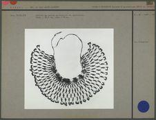 Collier en perles de coquille et verroterie