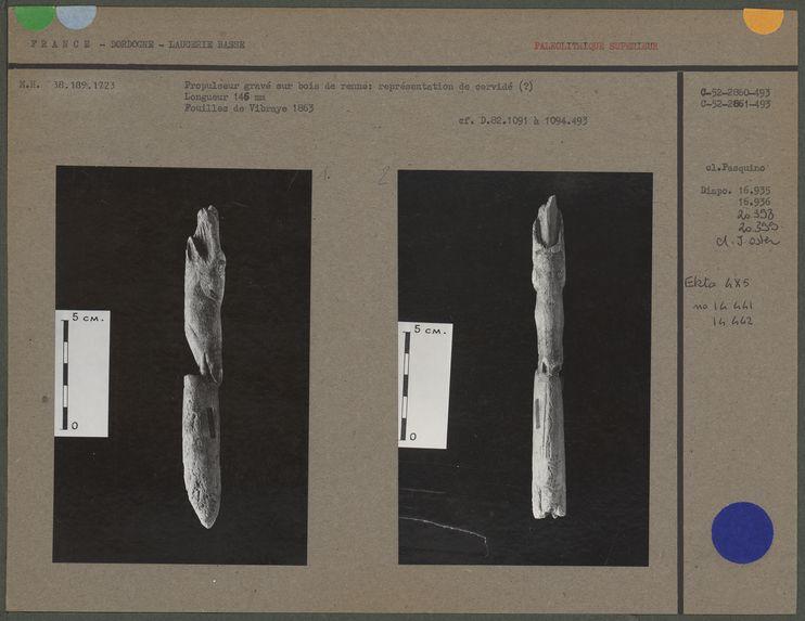 Cervidé sculpté sur bois de renne, magdalénien