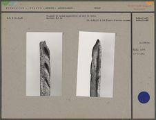 Fragment de harpon magdalénien en bois de renne