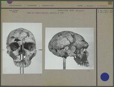 Crâne de l'adulte masculin découvert en 1909