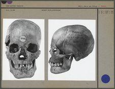Crâne d'époque protohistorique
