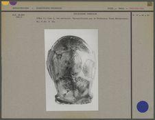 Crâne du Sinanthropus Pekinensis II, vue verticale
