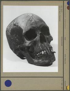 Crâne préparé