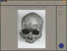 Crâne d'adulte gravé, un oiseau