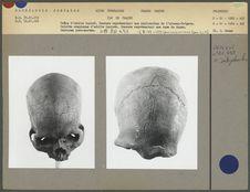 Crânes gravés
