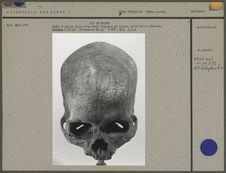 Crâne d'adulte gravé, oiseau