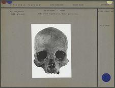 Crâne gravé