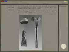 Pierre taillée engainée de tapa, pierre d'herminette et spatule en os