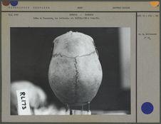 Crâne de Tasmanien, vue verticale