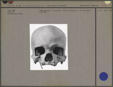 Crâne masculin