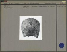 Crâne féminin