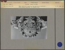 Crâne trouvé dans un tumulus sur les bords du lac Colhue-Huapi