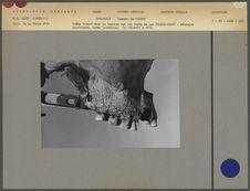 Crâne trouvé dans un tumulus sur les bords du lac Colhue-HuapiColl. de la Vaulx...