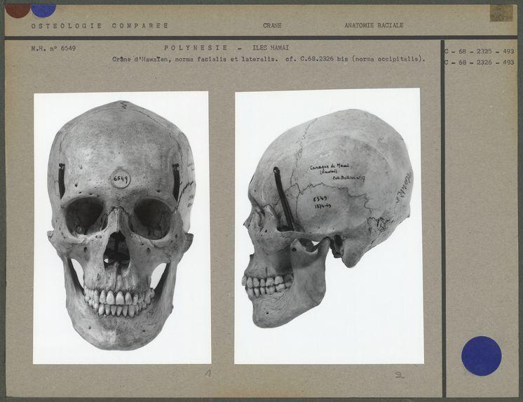 Crâne d'Hawaïen
