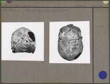 Crâne n.facialis et lateralis