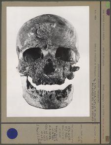 Crâne du vieillard de Cro-Magnon, face