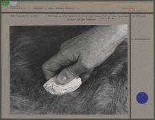 Utilisation d'un racloir en silex pour travailler la peau
