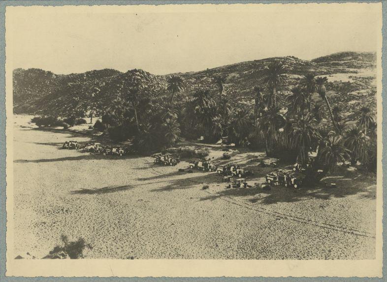 Quelques palmiers au creux des rochers noirs
