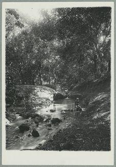 Une rivière en forêt