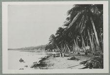 Tuamotu. La plage de Fakarava
