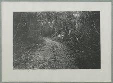 Sous-bois dans l'ile de Cayenne