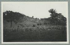 Ile de Cayenne ; Mont Joly ; Propriété Prévot ; Canne à sucre