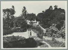 Guadeloupe ; jardin botanique de Basse-Terre